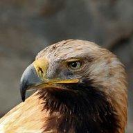 Domains Markt