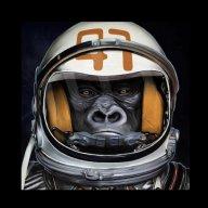 Woke Monkey