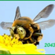 ~ The 34 Year Buzz!!