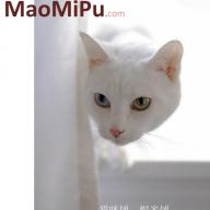 maomipu
