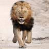 Domain Lion