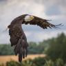Eagle578