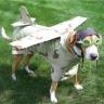flybuzz