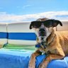 Dotword